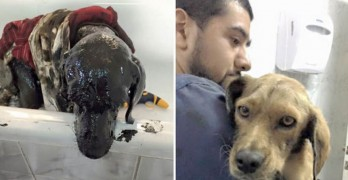Father and Son Team Rescue Dog Left in Tar Pit to Die