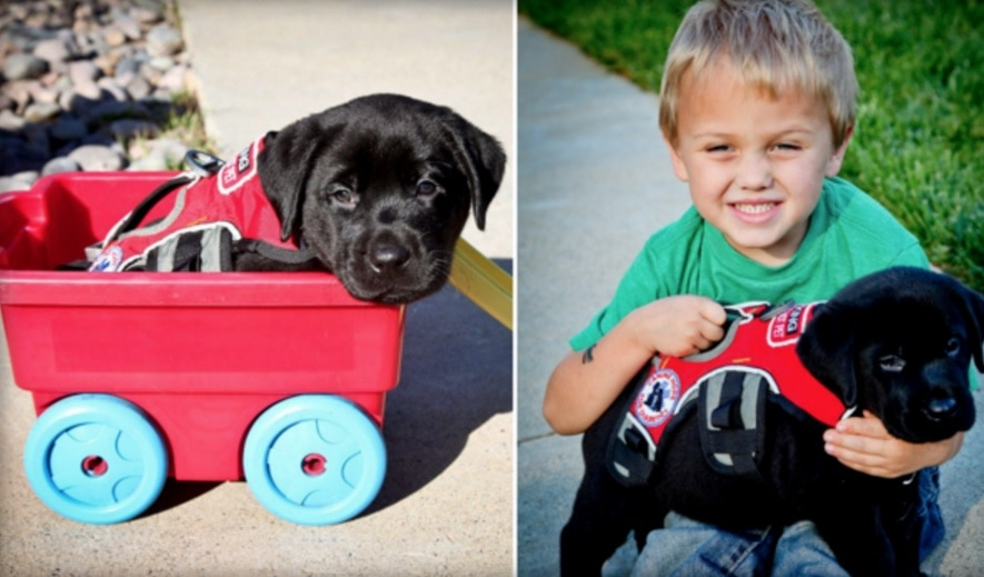 Hero Dog Saves the Life of 7-Year-Old Little Boy