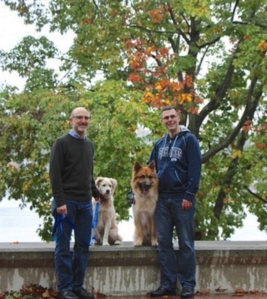 3.8.16 - dog study1