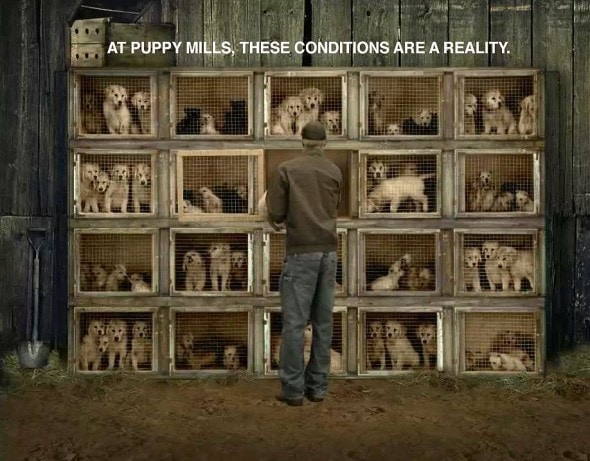 3.9.16 - Boston Bans Puppy Mill Pet Shops3