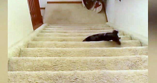Long Dog Takes the Long Way up the Stairs