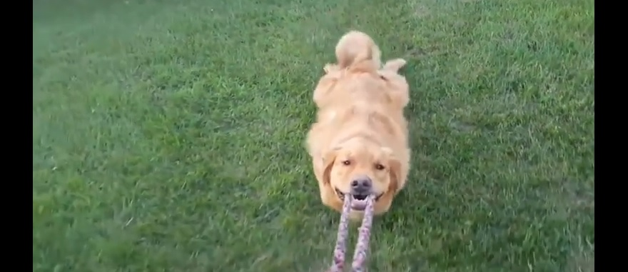No one Makes us Laugh Quite Like our Dogs