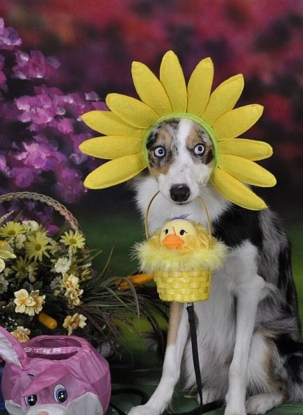 Here Comes the Easter Doggy - LIFE WITH DOGS