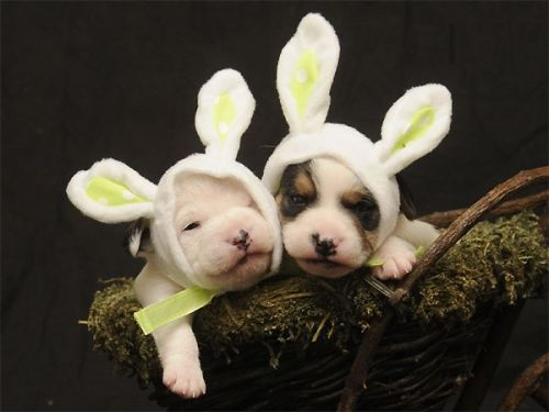 Here Comes the Easter Doggy