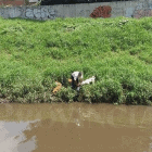 Man Saves Dog Drowning in Rio Grande
