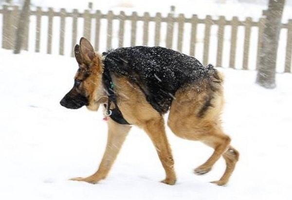 Quasimodo, A Special Needs Dog With A Following