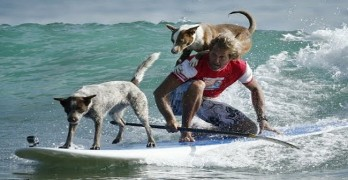 Australian Surf Champion Uses Waves To Inform About Rescue Dogs