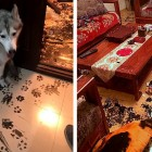 Dirty Dog: Cute Husky's Family Returns Home to Epic Mess
