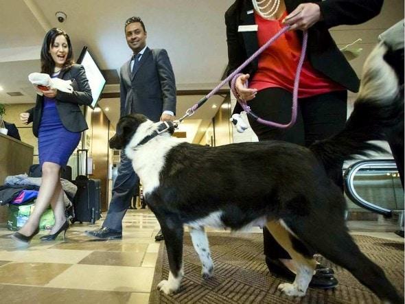 4.10.16 - Ottawa Hotel Cum Dog Sanctuary3