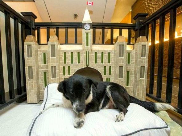 4.10.16 - Ottawa Hotel Cum Dog Sanctuary4
