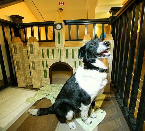 4.10.16 - Ottawa Hotel Cum Dog Sanctuary5