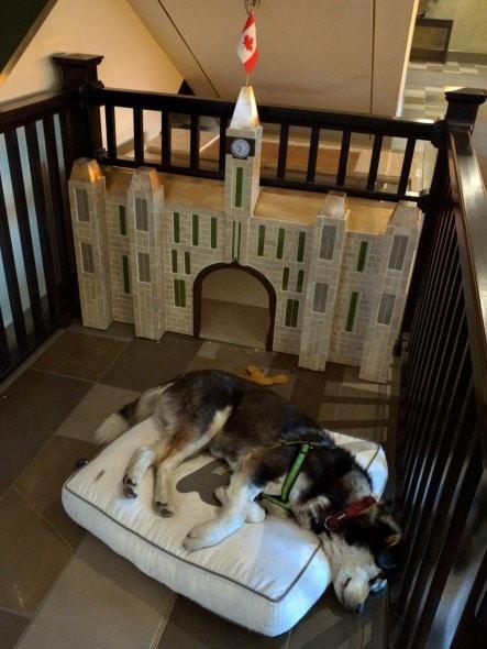 4.10.16 - Ottawa Hotel Cum Dog Sanctuary7