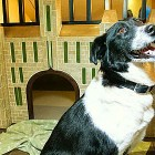 Canadian Hotel Becomes Foster Home for Shelter Dogs