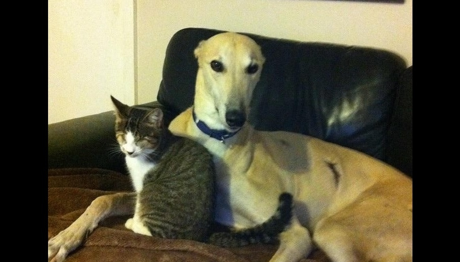 Dog Rescued From Abusive Past Finds Soul Mate in Blind Cat