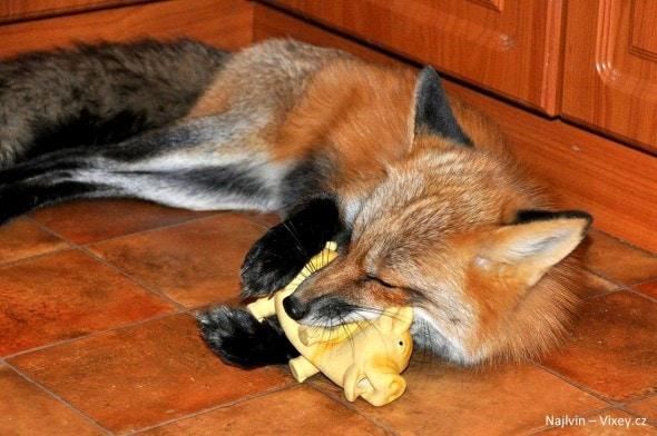 4.11.16 - Fox is a Cat-Dog10