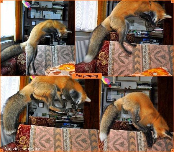 4.11.16 - Fox is a Cat-Dog13