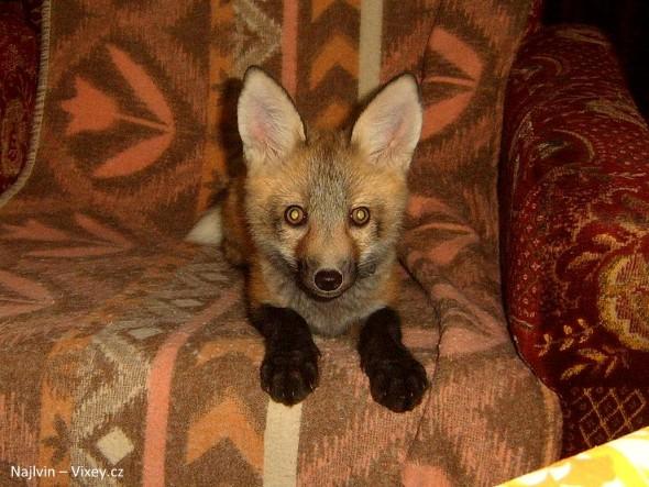 4.11.16 - Fox is a Cat-Dog15