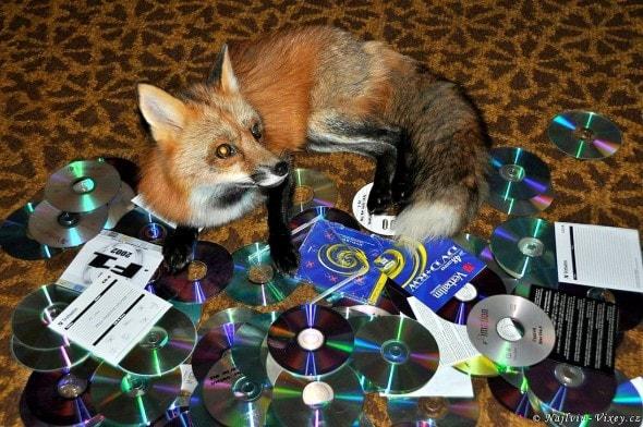 4.11.16 - Fox is a Cat-Dog6