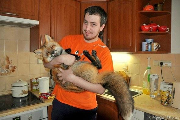 4.11.16 - Fox is a Cat-Dog7