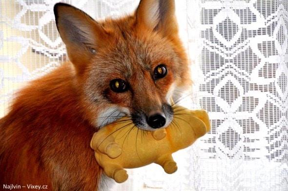 4.11.16 - Fox is a Cat-Dog9