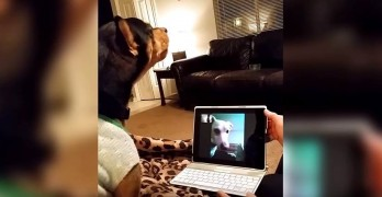 Long Distance Dog Friends Skype Together
