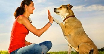 Study Shows Why What We Say to Our Dogs Matters