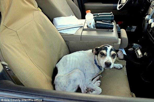 4.15.16 - Dog Saves Woman Lost in Arizona3