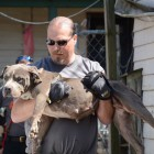 UPDATE: Quad City Dog Fighting Ring Bust