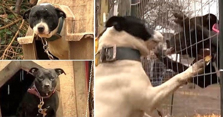 See the Awesome Reactions of Dogs Being Unchained for Good