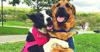 "Rescue Dogs Hug When Asked ""Who's Your Best Friend?"""