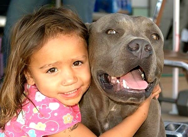 Man Worried About Wife's Pit Bull When Baby Is Born Is