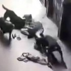 Idiot Tries to Steal A Dog and Gets What's Coming to Him