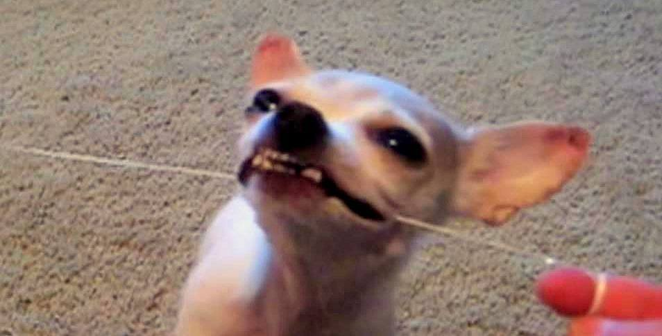This Dog Actually Likes to Floss!
