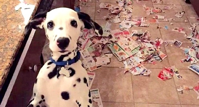 12 Dogs Who Refuse to Grow Up