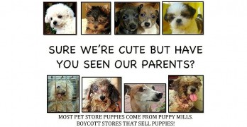 Philadelphia Bans Pet Shops from Selling Puppy Mill Dogs