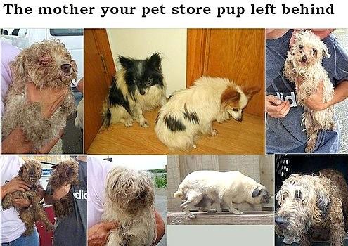 4.21.16 - Philadelphia Bans Puppy Mill Dogs in Shops1
