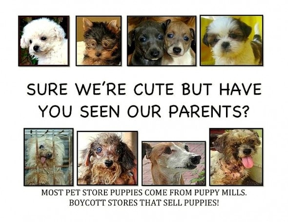 4.21.16 - Philadelphia Bans Puppy Mill Dogs in Shops2