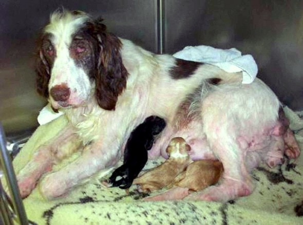4.21.16 - Philadelphia Bans Puppy Mill Dogs in Shops3