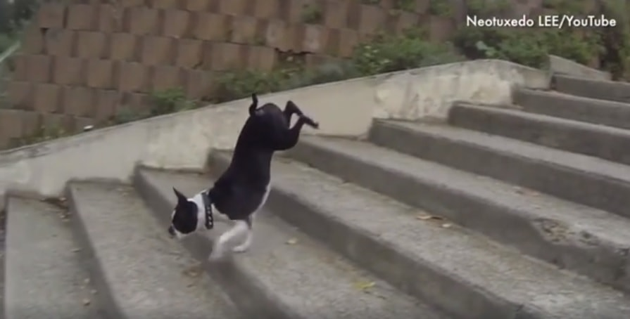Dogs Who Are Hilariously Confounded by Stairs