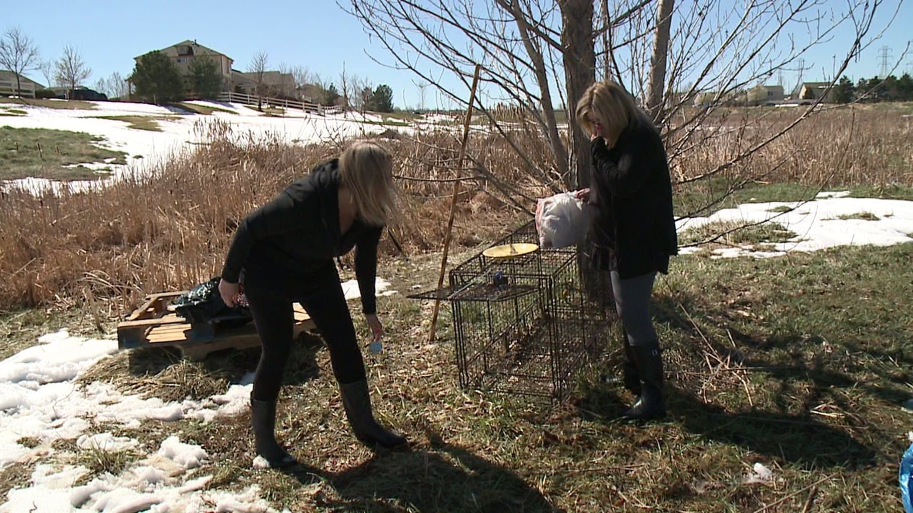 """Two Colorado Women Start Lost Dog """"Detective Agency"""""""