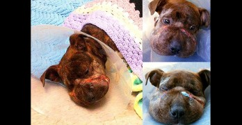 Baltimore Animal Control Saves the Life of a Badly Abused Puppy