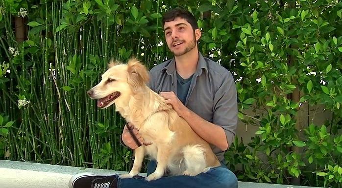 How Medicinal Marijuana Is Saving Dogs' Lives