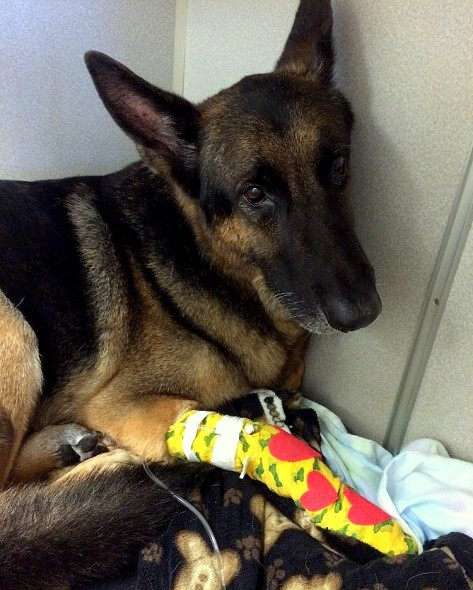 4.26.16 - Retired Police Dog Leads Firefighters to Toddlers Trapped in Burning Home1