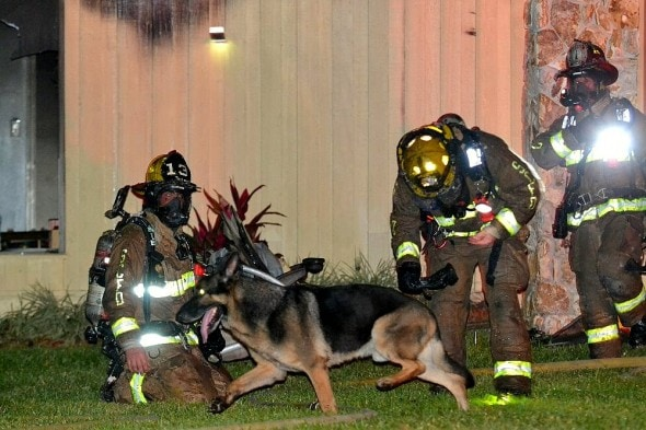 4.26.16 - Retired Police Dog Leads Firefighters to Toddlers Trapped in Burning Home3