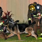 4.26.16 - Retired Police Dog Leads Firefighters to Toddlers Trapped in Burning Home4