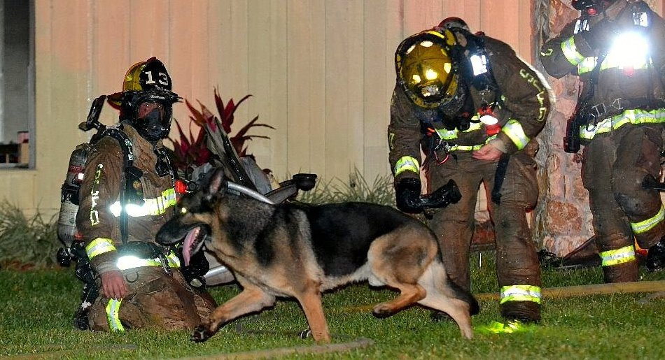 Retired Police Dog Leads Firefighters To Toddlers Trapped