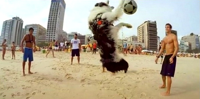 This Dog Is a Better Soccer Player Than All of Brazil