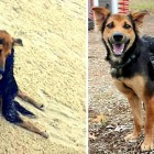 Paralyzed Dog Whose Owners Didn't Care Saved by a Complete Stranger