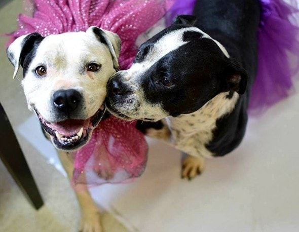 4.28.16 - Won't Anyone Adopt These Two Sisters1