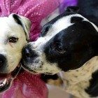 Won't Anyone Adopt These Two Lovely Sisters??